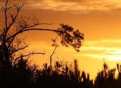 Ciel Lue 40210 Levé de soleil un matin de novembre sur les landes