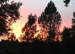 Ciel Lue 40210 Couché de soleil landais un soir de novembre