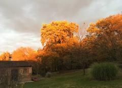 Ciel Aigrefeuille 31280 Couché de soleil sur les arbres