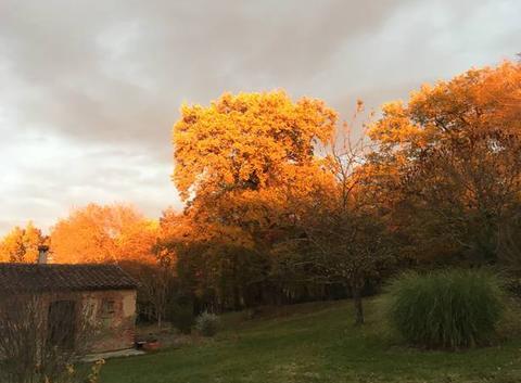 Couché de soleil sur les arbres