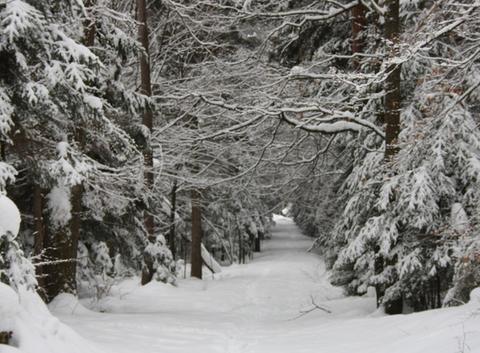Beauté de la campagne polonaise en hiver