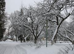 Neige Lviv Jardin ukrainien