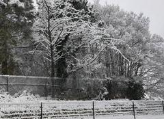 Neige Claix 38640 Claix sous la neige