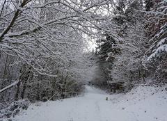 Neige Saint-Diery 63320 Dans les bois de la cheminée des fées