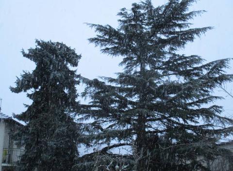 Neige à Maurs (15)