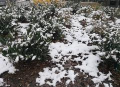 Neige Annemasse 74100 L'hiver arrive en Annemasse