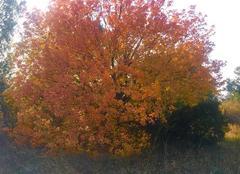Faune/Flore Saint-Andre 66690 Couleurs d?automne