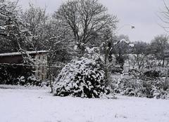 Neige Chauvency-Saint-Hubert 55600 Neige et froid