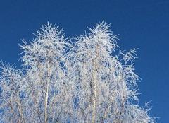 Froid Vieu-d'Izenave 01430 Givre sur ciel bleu