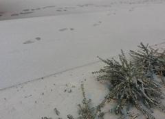 Neige Petersbach 67290 Il neige sur l'Alsace.