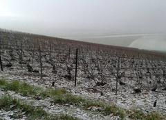 Neige Bergeres-les-Vertus 51130 1ere neige dans les vignes
