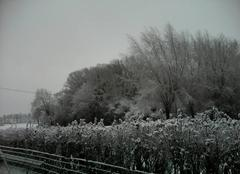 Neige Aix-Noulette 62160 Neige sur le hameau de noulette