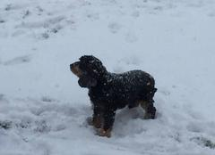 Neige Adamswiller 67320 Vive la neige