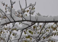 Neige Buis-les-Baronnies 26170 Neige de décembre