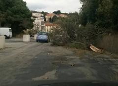 Vent Port-Vendres 66660 Branche cassée