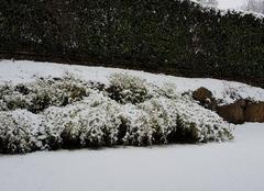 Neige Seynod 74600 Il neige