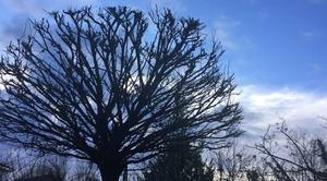 Ciel Mours-Saint-Eusebe 26540 Ciel mitigé ce matin