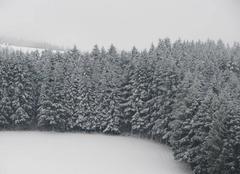 Neige La Chapelle-de-Mardore 69240 Il a encore neigé cette nuit !