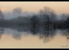Brouillard Saint-Baudille-de-la-Tour 38118 Entre reve et realité
