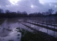 Pluie Plassac 33390 Inondations estuaire de la Gironde