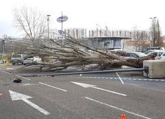Catastrophe Rosny-sous-Bois 93110 Tempête Rosny 2