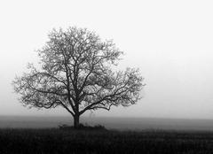 Brouillard Chatillon-sur-Cher 41130 Brouillard