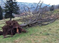 Tempête La Bresse 88250 Après la tempête du 3 Janvier 2018 ..