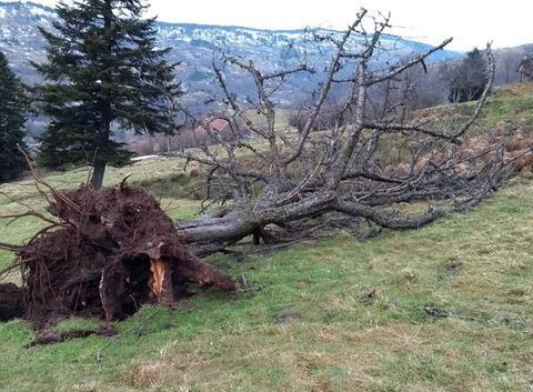 Après la tempête du 3 Janvier 2018 ..