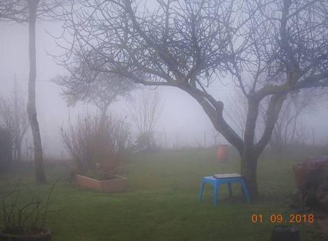 Brouillard.
