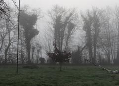Brouillard Bonnemaison 14260 Brume matinale
