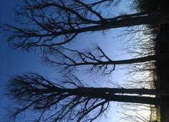 Ciel Villeneuve-d'Ascq 59491 Jour naissant sur le parc