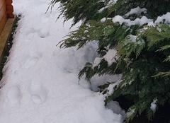 Neige Oyeu 38690 20cm en nord isere
