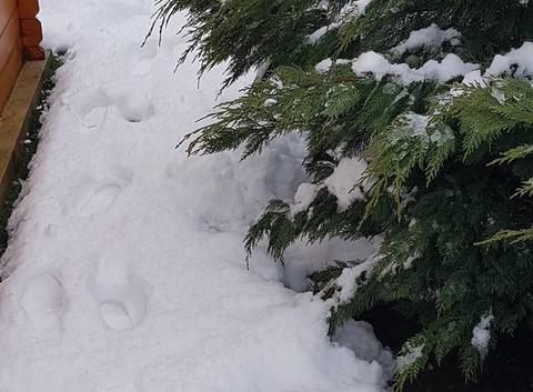 20cm en nord isere