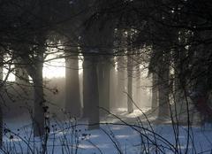 Brouillard Les Villettes 43600 Timide retour du soleil