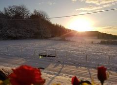 Neige Rougegoutte 90200 Roses des neiges