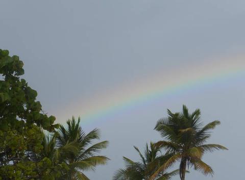 Arc en ciel et palmiers à Capesterre