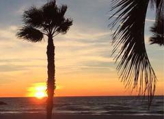 Ciel Six-Fours-les-Plages 83140 Palmiers , mer et soleil du soir ....