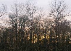 Ciel Langon 33210 Lever de soleil ce matin