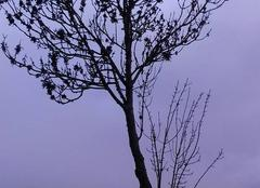 Brouillard Caylus 82160 Petit matin sous  les brumes