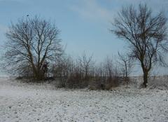 Neige Griesheim-sur-Souffel 67370 Matinée glaciale