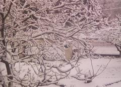 Neige Brassac-les-Mines 63570 Mon jardin