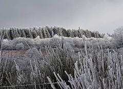 Neige Cambon-et-Salvergues 34330 Magie d'hiver