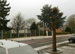 Neige Curgies 59990 Neige sur le Nord a côté de Valenciennes