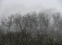 Ciel Louvie-Juzon 64260 La neige arrive