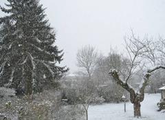 Neige Pommereuil 59360 Neige modérée continue ce matin au Pommereuil dans le Nord