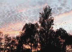 Ciel Samer 62830 Vol de pigeons