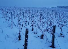Neige Beine 89800 Neige dans les vignes