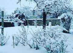 Neige Lisieux 14100 Paysage d hiver