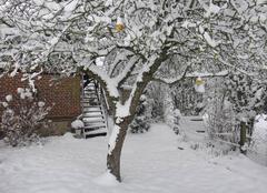 Neige Saint-Philbert-des-Champs 14130 Gelée de pomme montée en neige !!!