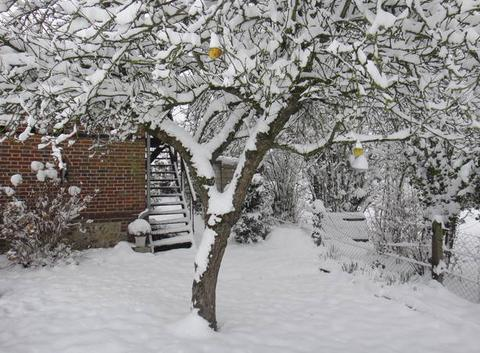 Gelée de pomme montée en neige !!!
